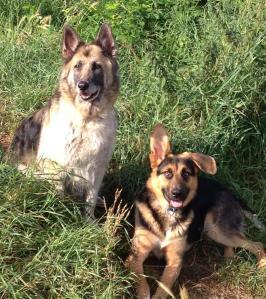 Kiara und Balko