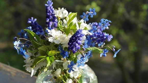 flowers-2222532_640
